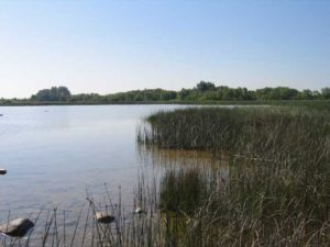 Cheboygan marsh, Michigan